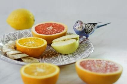 can parrots have grapefruit?