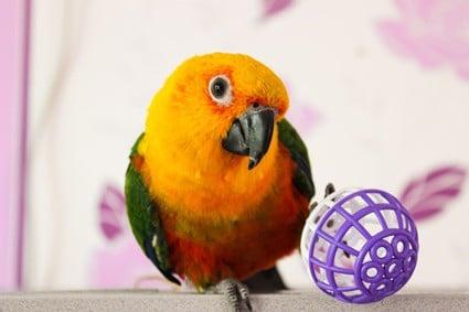conure beak problems
