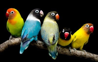 different types of small parrots with pictures