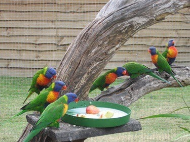 high protein food for parrots