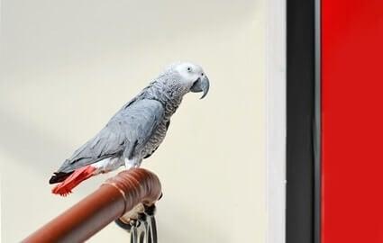parrot emotional intelligence