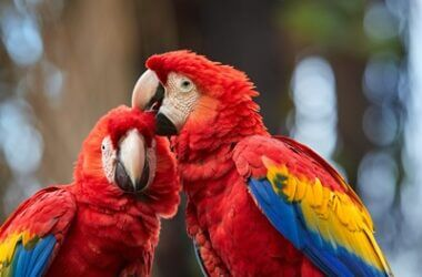 parrots with red feathers