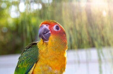 why do birds make crying noises?