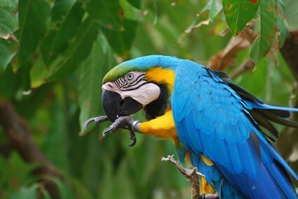 why do parrots bite their nails?