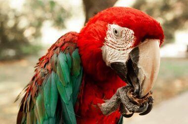 Parrot Beak Color Change