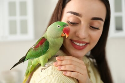 do Parakeets Know Their Owners?
