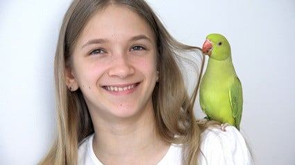do parakeets bond with their owners?
