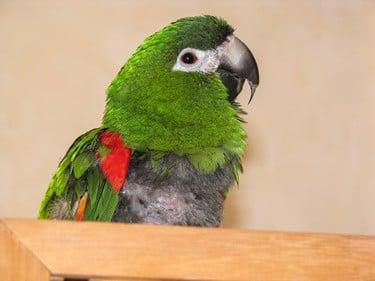 how often should parrots eat?