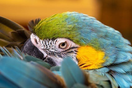 parrot has crusty nare
