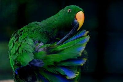 parrots nose problems