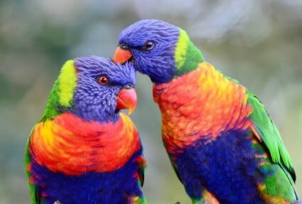 what color are parrots beaks?