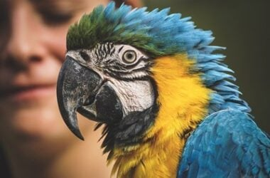 Signs of Old Age in Parrots