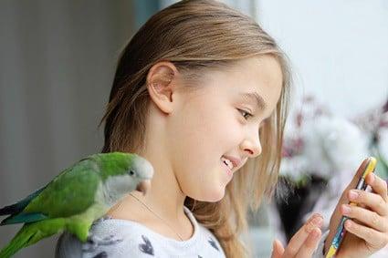 are quaker parrots affectionate?