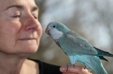 are quaker parrots cuddly?