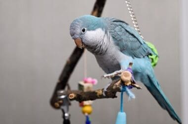 how do I know if my quaker parrot is happy?