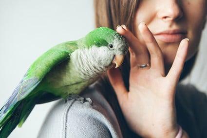 how to bond with a quaker parrot