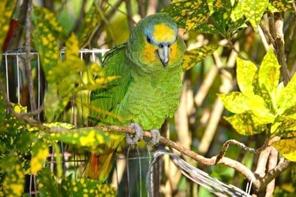 plants that attract parrots to your yard