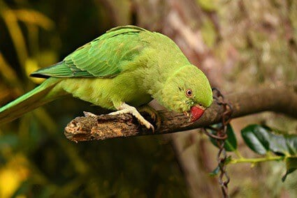 signs of aging in parrots