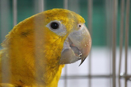 can my parrot sleep with me?