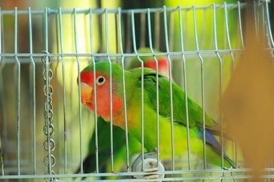 can parrots sleep with you?