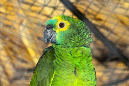 is it okay to sleep with parrots?