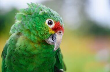 what do parrot sounds mean?