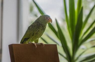what parrots are good for apartments?