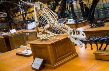 are parrots descendants of dinosaurs?