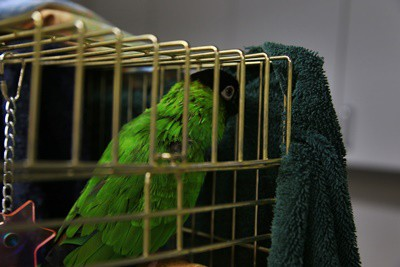 how to hold a parrot in a towel