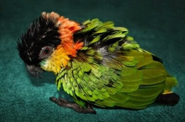 how do you comfort a dying pet parrot?