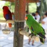 do male or female parrots make better pets?